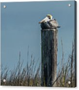 Pelican On A Piling Acrylic Print