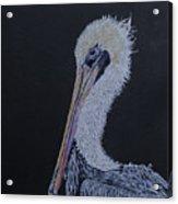 Pelican On Black Acrylic Print