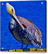 Pelican On Dock Looking Down Acrylic Print