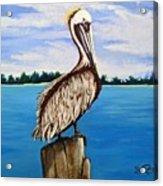 Pelican On Post 2 Acrylic Print