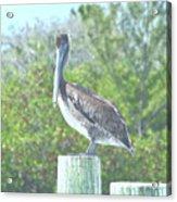 Pelican On Post Acrylic Print