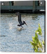 Pelican On The Waves Acrylic Print