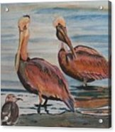 Pelican Party Acrylic Print