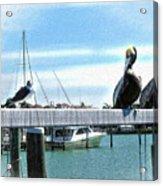 Pelican Perch Acrylic Print