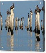 Pelican Pilings Acrylic Print