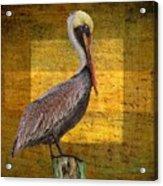 Pelican Poetry Acrylic Print