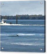 Pelican Porpoise And Fishermen Acrylic Print