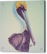Pelican Prince Acrylic Print