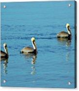 Pelican Racers Acrylic Print