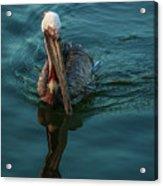 Pelican Reflection Acrylic Print