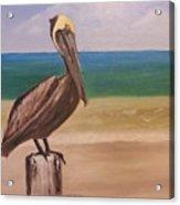Pelican Rest Stop Acrylic Print