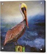 Pelican Seas Acrylic Print