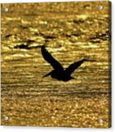 Pelican Silhouette - Golden Gulf Acrylic Print