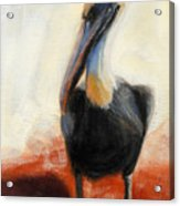 Pelican Study Acrylic Print