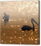 Pelican Sunrise Acrylic Print