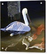 Pelican Swim II Acrylic Print
