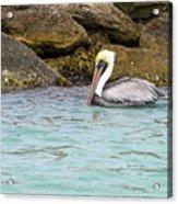 Pelican Trolling Acrylic Print
