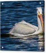 Pelican Wake Acrylic Print