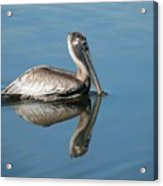 Pelican With Reflection Acrylic Print