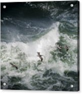 Pelicans And Surf Acrylic Print