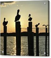 Pelicans At Sunset Acrylic Print