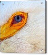 Pelican's Eye Acrylic Print