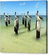 Pelicans On Pier Pilings Acrylic Print