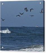 Pelicans Over The Atlantic Acrylic Print