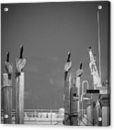 Pelicans Perched By Sailboat Acrylic Print