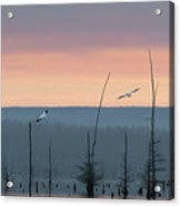 Pelicans Welcome The Day Acrylic Print