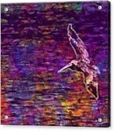 Pelikan Bird Brown Pelican  Acrylic Print