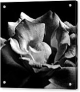 Penetrating The Rose Acrylic Print