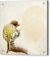 Peng Acrylic Print