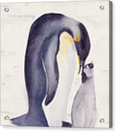 Penguin And Baby Acrylic Print