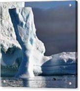 Penguin And Ice Acrylic Print