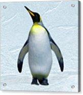 Penguin Acrylic Print