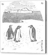 Penguins On Antarctica Acrylic Print