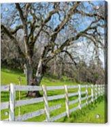 Penn Valley Tree Acrylic Print