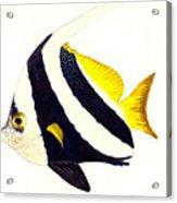Pennant Fish Acrylic Print