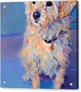 Penny Peach Acrylic Print
