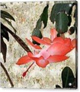 Penny Postcard Japonaise Acrylic Print