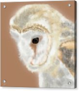 Pensive Barn Owl Acrylic Print