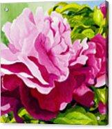 Peonies In Pink Acrylic Print