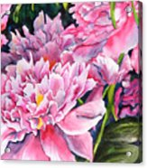 Peony In Pink Acrylic Print