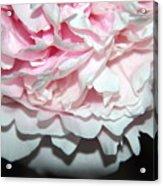 Peony Petals Acrylic Print
