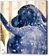 Pepper And The Snow Storm Acrylic Print