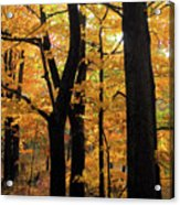 Pequaming Fall Acrylic Print