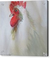 Pequot The Rooster Acrylic Print