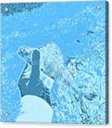 Perch Blue Acrylic Print