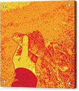 Perch Red Yellow Acrylic Print
